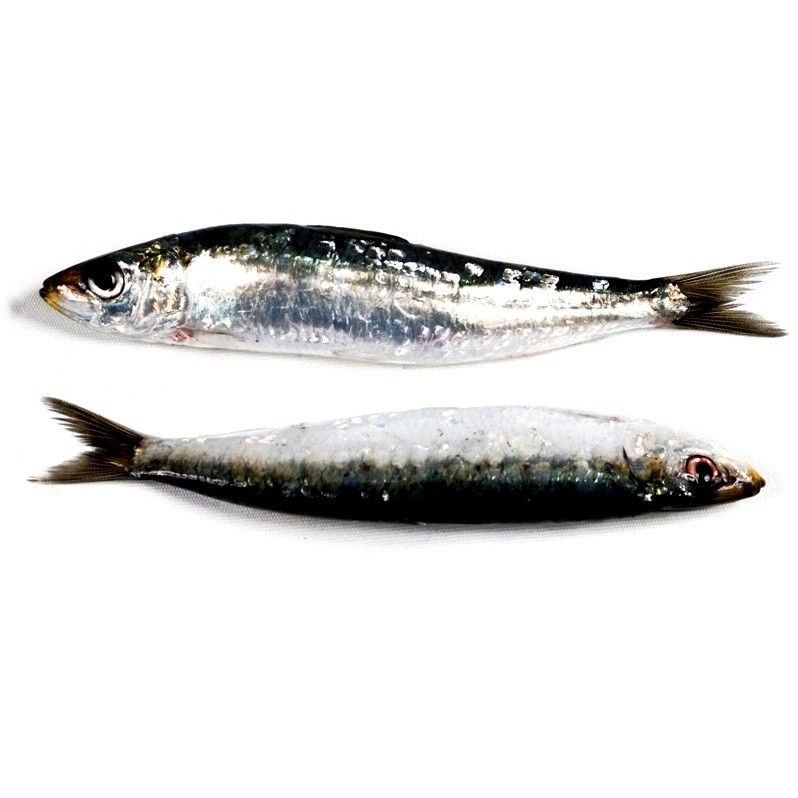 receta filetes de sardina con tocino a la plancha andra mari