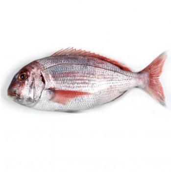 Pargo Pescados, características e información