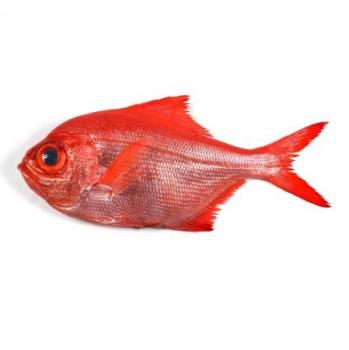 Fondo de pescado en ingles