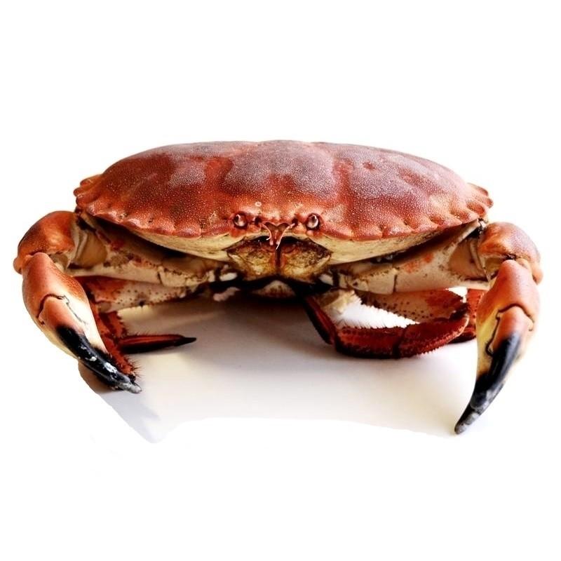 Buey De Mar Cocido Crustáceo