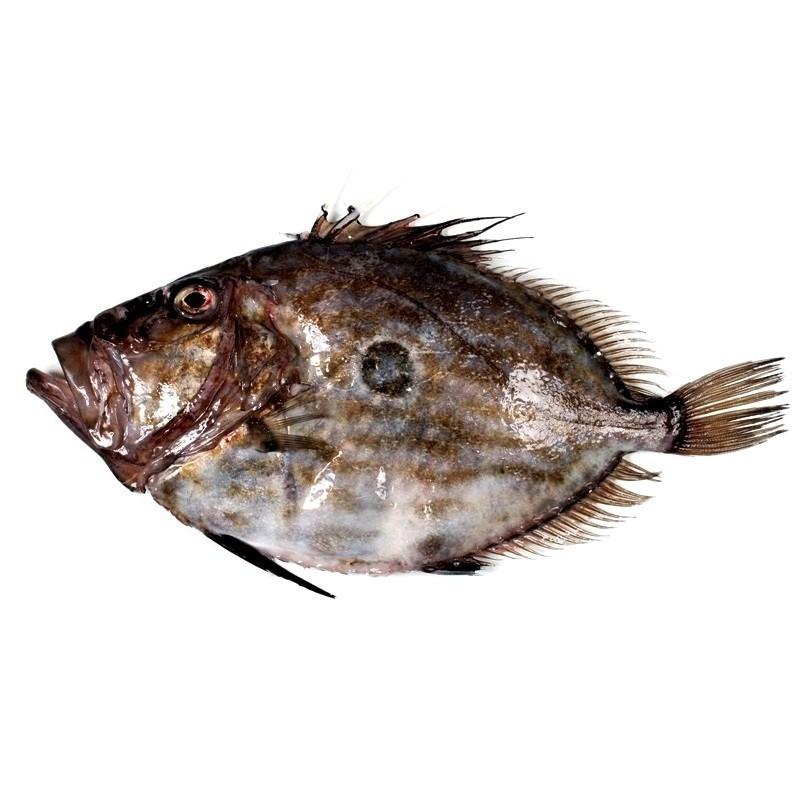 San Pedro, pez de